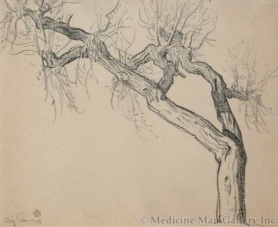Maynard Dixon (1875-1946) - SOLD - Arizona Cottonwood