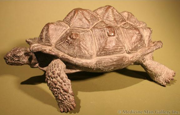 Mark Rossi - African Leopard Tortoise