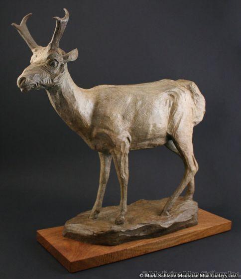 Mark Rossi - Antelope Buck