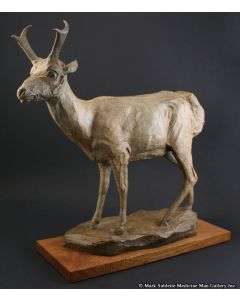 Mark Rossi - Antelope Buck