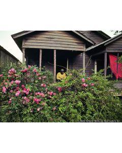 Nathan Benn - Shotgun House Garden, Helena, Arkansas, 1983