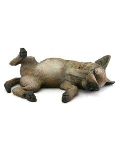 Star Liana York - Coyote I Pup (lying down)