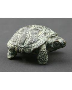Mark Rossi - Desert Tortoise Walking
