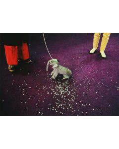 Nathan Benn - Elephant Dog, Miami, Florida, 1981