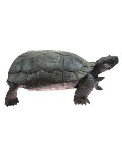Mark Rossi - Female Desert Tortoise, Pose # 2