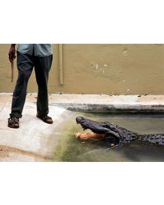 Nathan Benn - Gator Legs, St. Augustine, Florida, 1981