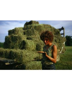 Nathan Benn - Hay Harvest Hands, New Haven, Vermont, 1973