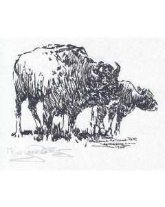 Jack van Ryder (1899-1968) - Buffalo and Calf, Yellowstone National Park