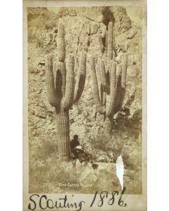 "A. Frank Randall - Giant Cactus Arizona, Feb. 16, 1887, 7.25"" x 4.375"" (M1322)"