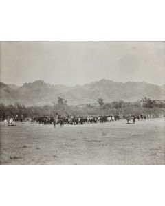 Henry Buehman (1851-1912) - Original Photograph of Cattle Scene (M90747A-0820-004)
