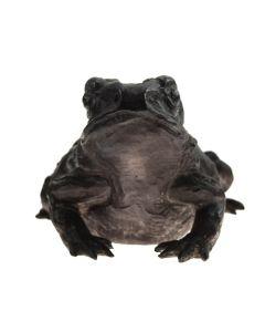 Mark Rossi - Sonoran Toad