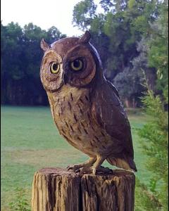 Star Liana York - Owlette