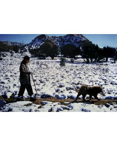 Dan Budnik (1933-2020) - Georgia O'Keeffe and Chow Hiking at the Ghost Ranch, New Mexico; October 1972 (PDC90211C-0121-006)