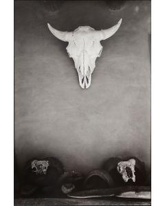 Dan Budnik (1933-2020) - Georgia O'Keeffe's Ghost Ranch Patio Portal, Buffalo Skull; October 1972 (PDC90211C-0121-019)