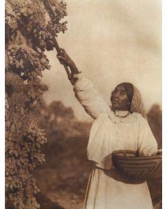 Edward S. Curtis (1868-1952) - Gathering Hanamh - Papago