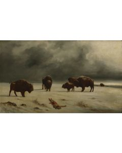 Astley David Middleton Cooper (1856-1924) - Buffalo in Winter (PDC91647-0320-001)