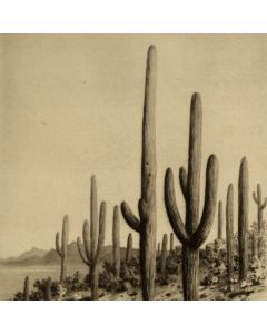 SOLD George Elbert Burr (1859-1939) - Giant Cactus, Tucson, Arizona