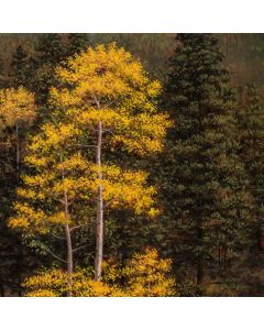 Jeff Aeling - Aspen and Pines