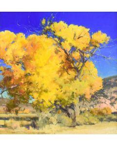 Jill Carver - Canyon Cottonwood
