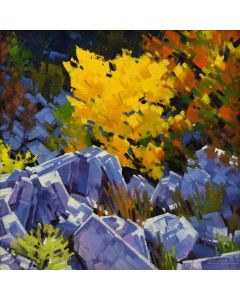 Stephen C. Datz - Sabino Canyon Splendor