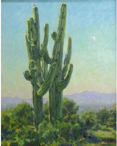 Gregory Hull - Sonoran Desert