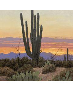 David Meikle - Saguaro Sunset (PLV91326B-0920-011)