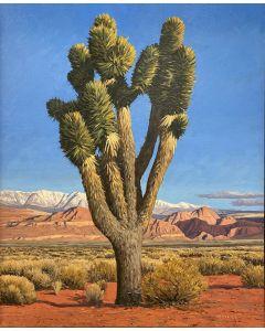 David Meikle - Joshua Tree (PLV91326B-0920-014)