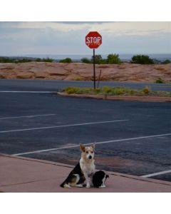 Mark Sublette - Rez Dogs