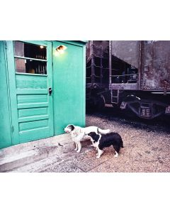 Nathan Benn - Yard Dog Loyalty, East St. Louis, Illinois, 1977