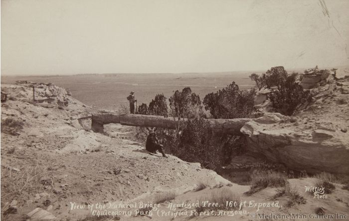 Ben Wittick (1845-1903) - View of the Natural Bridge, Agatized Tree, 160 ft Exposed, Chalcedony Park (Petrified Forest), Arizona