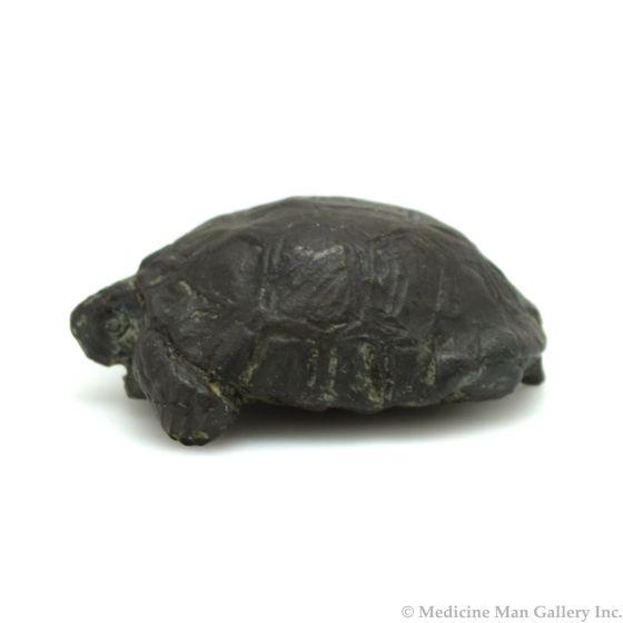 Mark Rossi - Desert Tortoise Hatchling in Shell