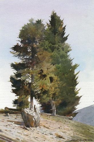 """Dean Mitchell, Colorado Pines, watercolor, 15""""x10"""""""