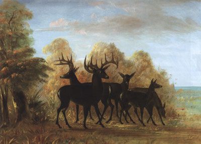 "George Catlin (1796-1872) Mule Deer (aka A Group of Deer) c. 1855, oil on canvas, 16"" x 19""  Courtesy JKM Collection, National Museum of Wildlife Art"